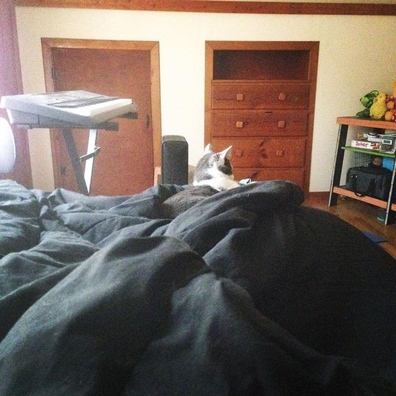 We're sick. Sick Sickday Sickness Sickaf Sickbaby Sicklife Imsick TooSick Kitten Kitty Cat Kittensofinstagram Catsofinstagram Petsofinstagram Tuesdaymorning Tuesday Sicktuesday
