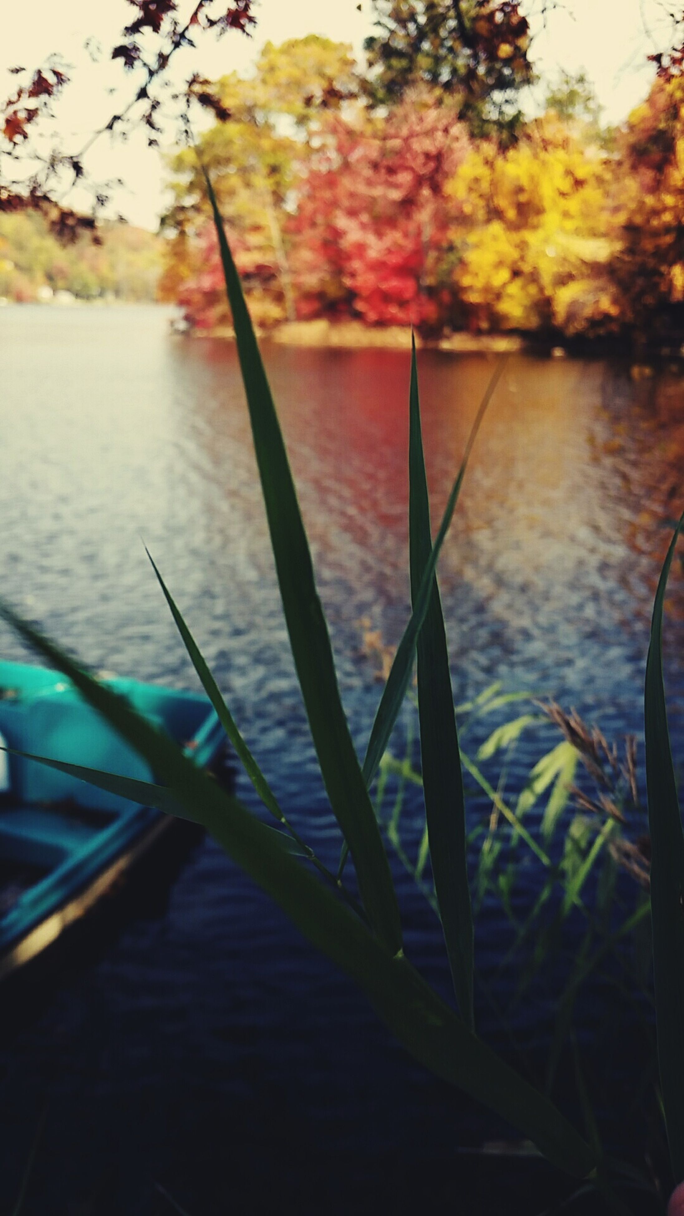 water, lake, reflection, nature, river, tranquility, waterfront, plant, day, tree, no people, outdoors, beauty in nature, leaf, rippled, growth, close-up, boat, pond, sunlight