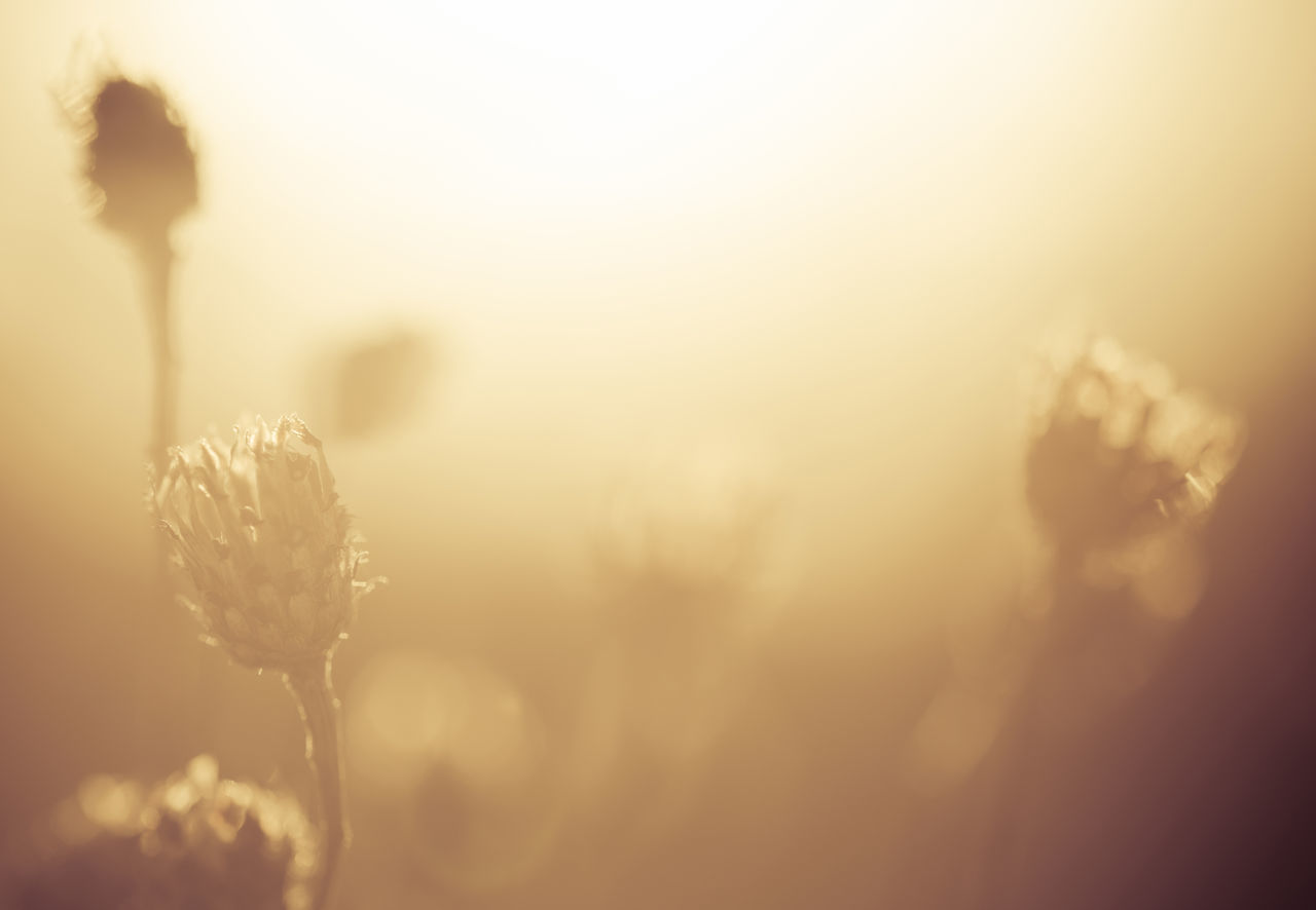 Beautiful Light Beauty In Nature Close-up Day End Of The Day Fields Of Gold Flowers Golden Hour Grass Grasslands Growth Meadow Meadow Flowers Nature No People Outdoors Plant Serenity Soft Sunset Tranquility Horizontal Warm Light Warm Colors