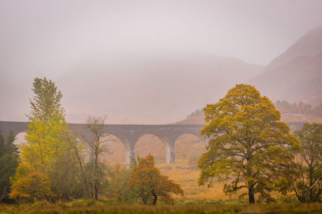 The Glenfinnan Viaduct in Scotland, known as The Harry Potter bridge from the films Arch Bridge Autumn Bridge Film Fog Franchise Glenfinnan Glenfinnan Viaduct Harry Harry Potter Harry Potter ⚡ Harrypotter Hills Hogwarts I Love Scotland Landscape Majestic Mist Outdoors Railway Remote Scotland Scotlandpassion Train Viaduct