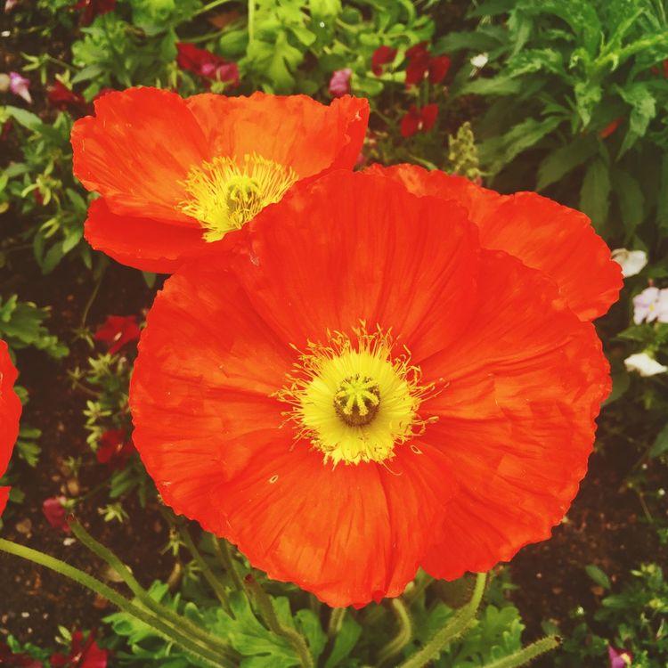 Petite fleur III ! Saturdayafternoon  Orange Flowers Flower Collection Sping Love