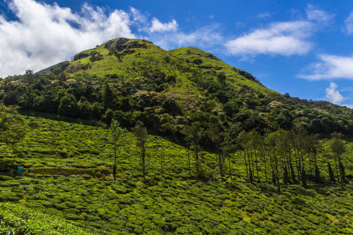Landscape Mountain Scenics Teaestate