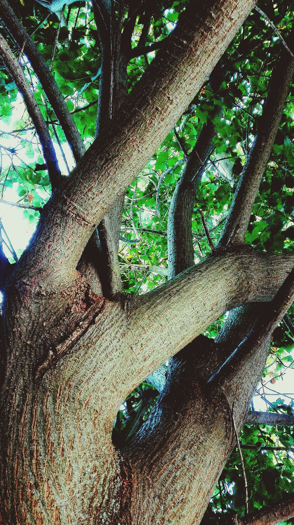 The Tree Tree Trunk Nature Green Color Low Angle View Tree Outdoors Day Close-up Beauty In Nature Leaf