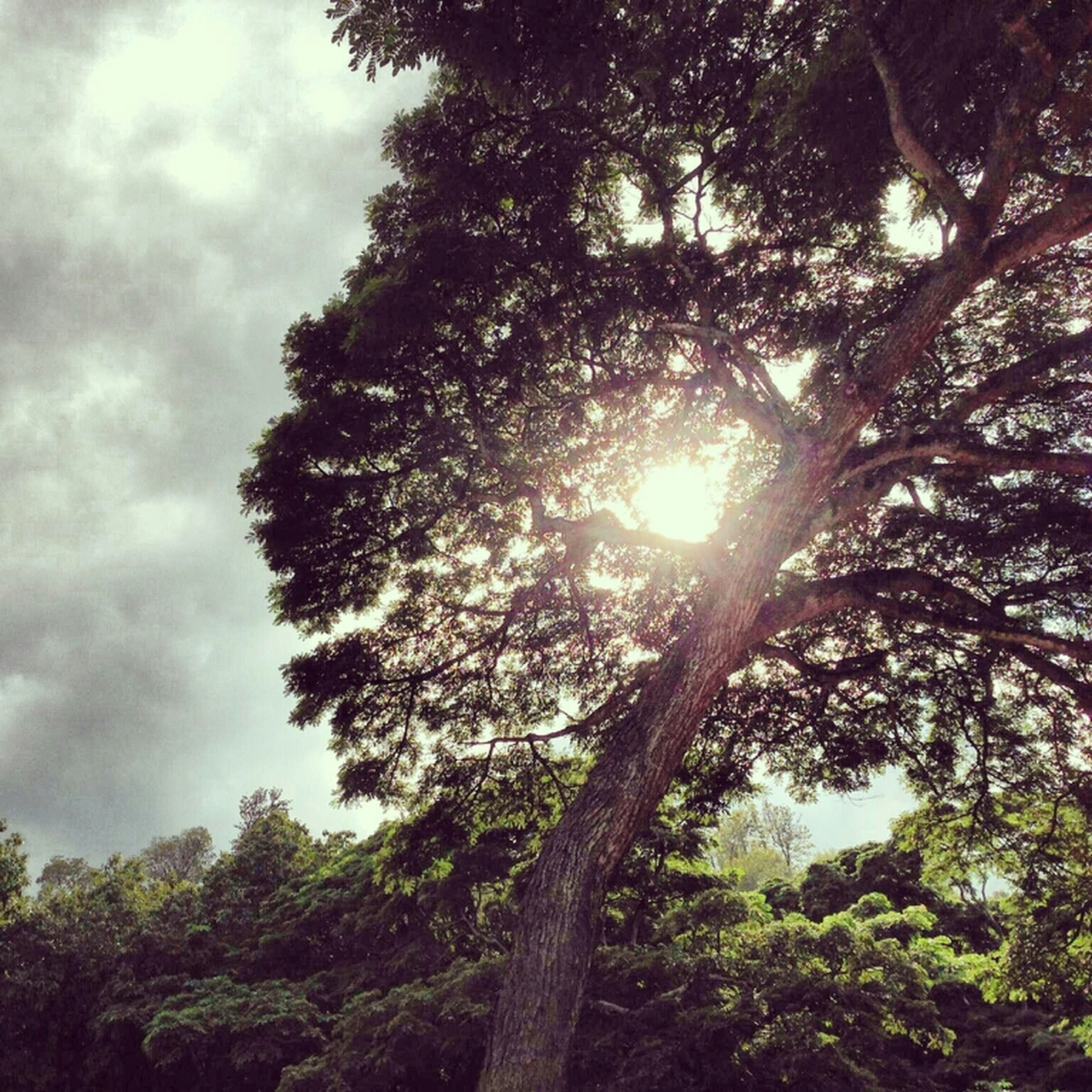 tree, low angle view, growth, sky, tranquility, branch, beauty in nature, nature, sun, tranquil scene, scenics, sunlight, cloud - sky, sunbeam, forest, no people, outdoors, day, silhouette, idyllic
