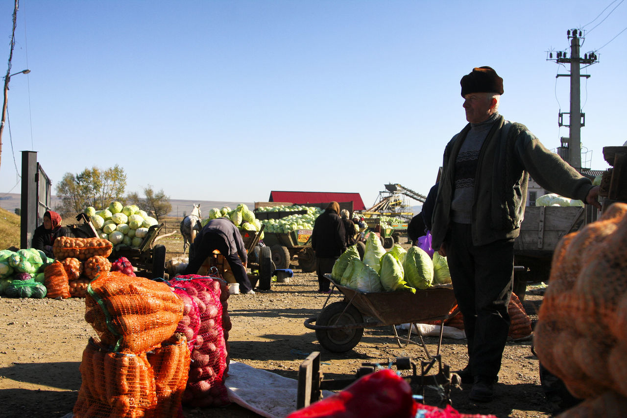 Bukovina Cabbage Clear Sky Day Fair Farmers Farmers Life Farmers Market Farmersmarket Food For Sale Freshness Healthy Eating Market Marketplace Men Occupation Outdoors People Real People Real People, Real Lives Romania Standing Sunlight Vegetables