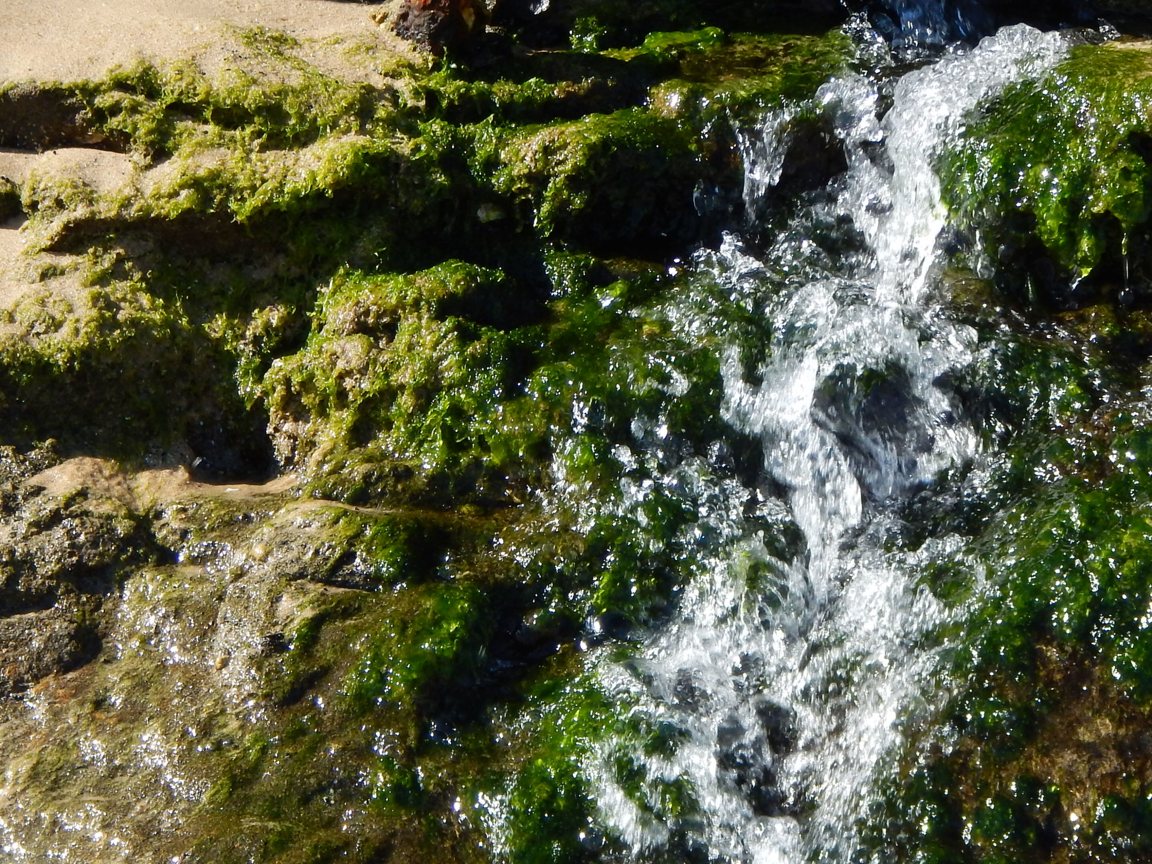 water, flowing water, motion, nature, waterfall, beauty in nature, flowing, forest, tree, scenics, long exposure, rock - object, waterfront, river, tranquility, no people, day, growth, outdoors, stream