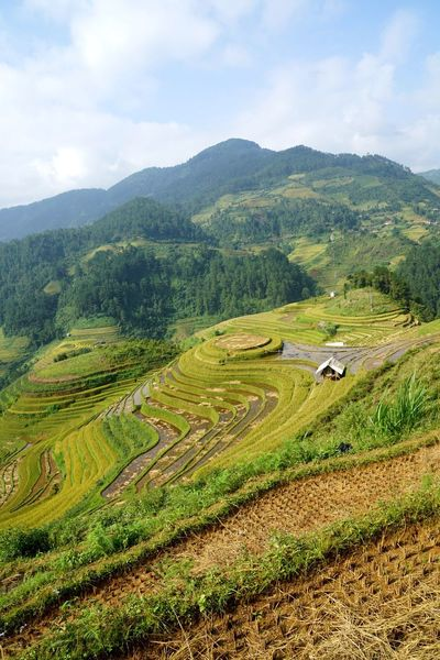EyeEm Vietnam Farmland Mucangchai Vietnam Travel Photography