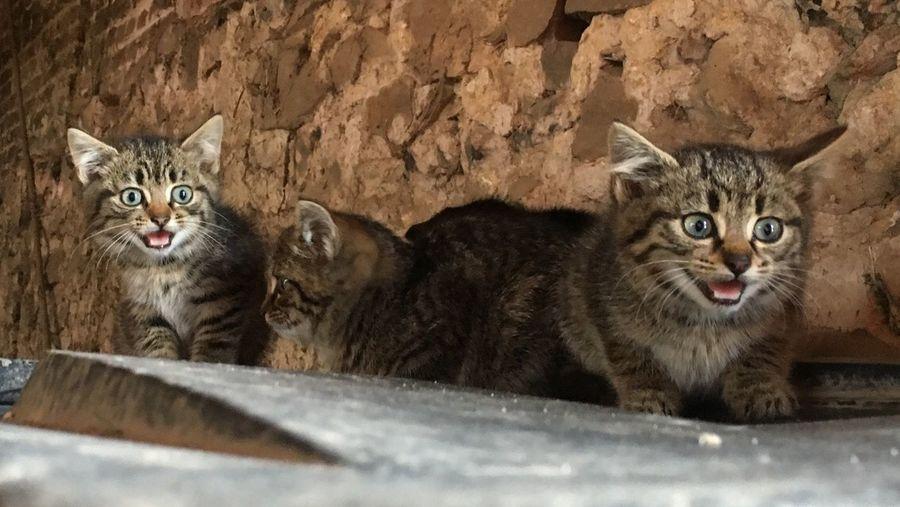 Cat Cats Chat Chats Chaton Chaton ♥ Chatons Afraid Sausage Peur Effrayer Agressif Agressive Réplique Mignon Colere