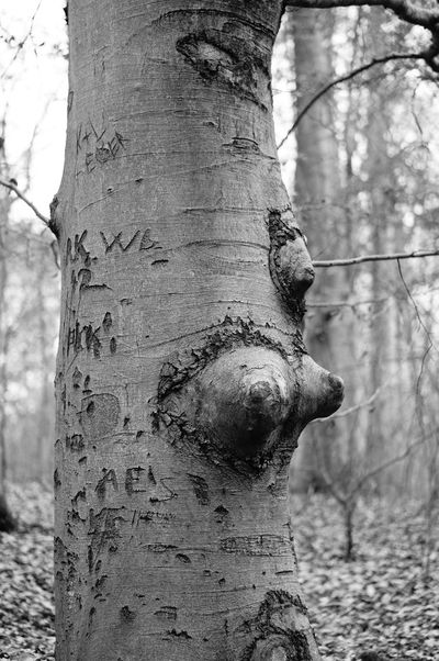 Graffiti Beauty In Nature Carvings Carvings In Wood Close-up Day Forest Nature No People Outdoors Tree Tree Trunk