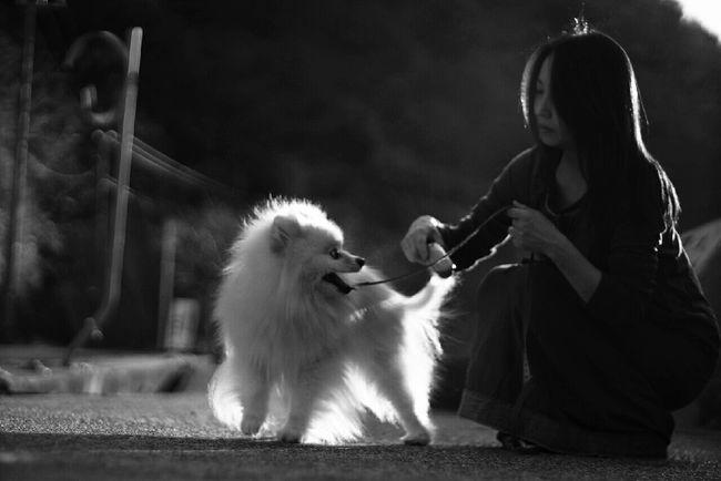 Mylovelydog Pomeranian Light And Shadow Black And White EyeEm Dogs Oldlens EyeEm Dog Lover モノクロ Monochrome EyeEm Bnw