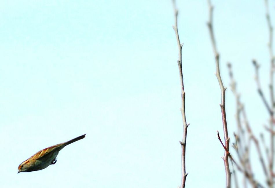 Mission Bird Missile . He's Goin In! Birds Gods Creation Nature_collection