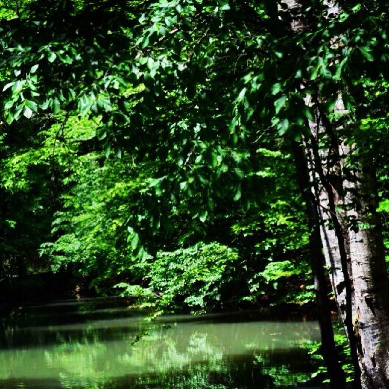 Yedigoller Yeşil Su Huzur