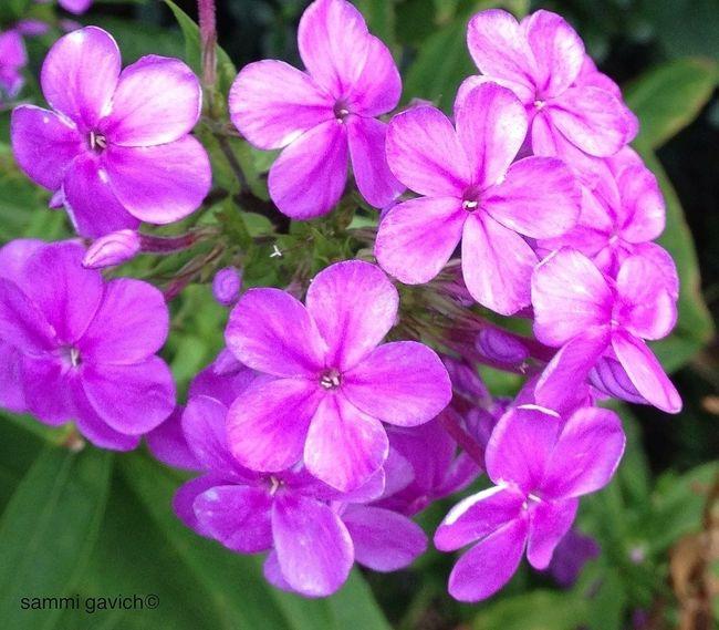 AMPt_community The Minimals (less Edit Juxt Photography) Flowerporn EyeEm Nature Lover