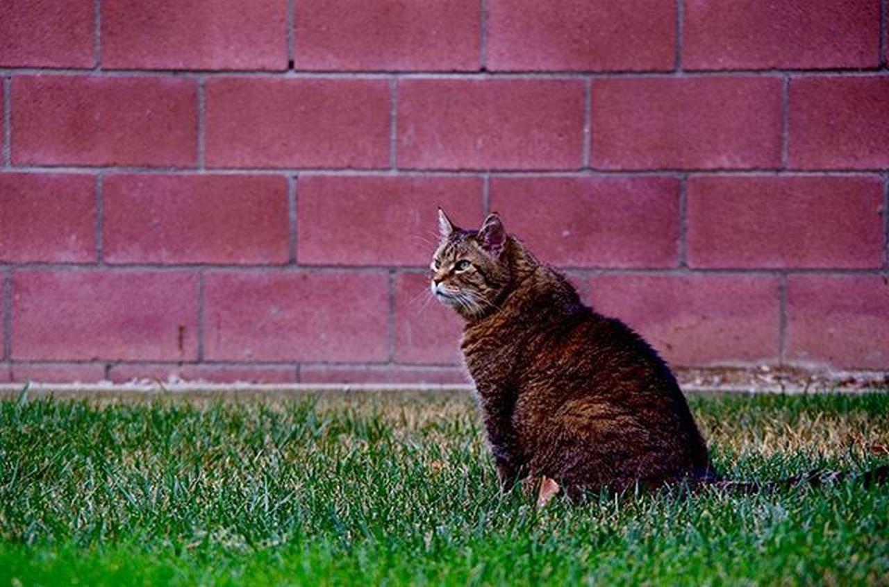 Missing Tiger on National Cat Day! Nationalcatday Tiger Tabby Fatcat  Pentaxk50 Pentaxcamera Pentax Pentaxiansunite Pentaxiansstandup Pentaxagram
