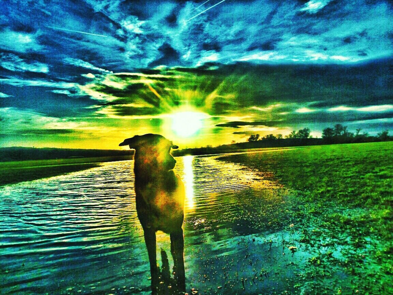 Color Explosion Beauty In Nature 😀 Nature. Countryside Sunrays Sun_collection, Sky_collection, Cloudporn, Skyporn Art Gallery Art And Craft Artphotography Apocalyptic My Dog Is Cooler Than Your Kid. 😝 Dog Lover Dog Of The Day Let's Have Some Fun EyeEm Best Edits Hdr_edits No Edit No Fun 😱 Jolie Fantasy Edits