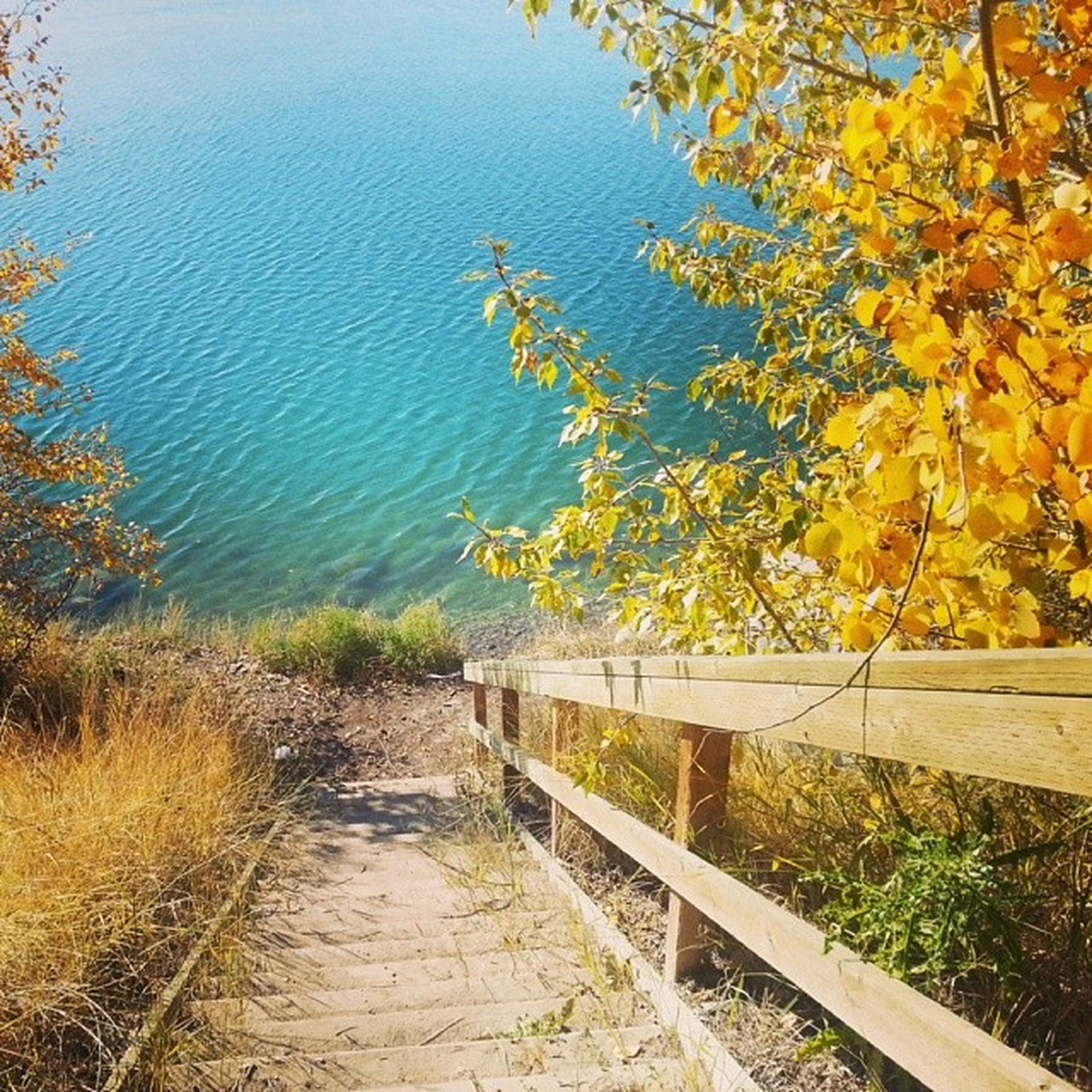 water, tree, tranquility, railing, nature, growth, beauty in nature, tranquil scene, the way forward, plant, scenics, lake, branch, autumn, day, grass, outdoors, no people, river, sunlight