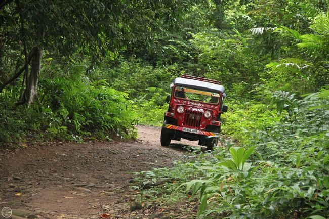 Day Dirt Road Freight Transportation Green Color Growth Journey Land Vehicle Lush Foliage Mode Of Transport Motor Vehicle Nature Outdoors Plant Red Safri, Jungle, Offroad, Forest The Way Forward Transportation Traveling Tree Truck Vehicle