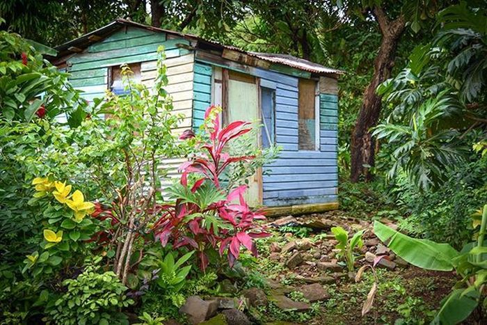 OurGrenada Grenada Rural_love Ig_grenada Bushments Nature_perfection Natureaddictsun Ig_caribbean Amazingphotohunter Natgeo Loves_caribbeansea Nature PureGrenada Golden_click Splendid_shotz IGDaily Instagram Instagramhub Andyjohnsonphotography