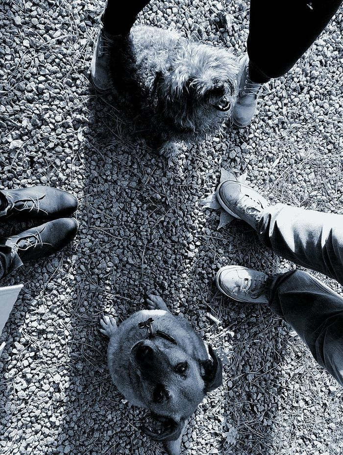 High Angle View Sand Day Low Section Real People Human Body Part Shadow Animals In The Wild Outdoors Men Nature Mammal Close-up People Women Womans Legs Woman Dog Dogs My Dog Bestfriend