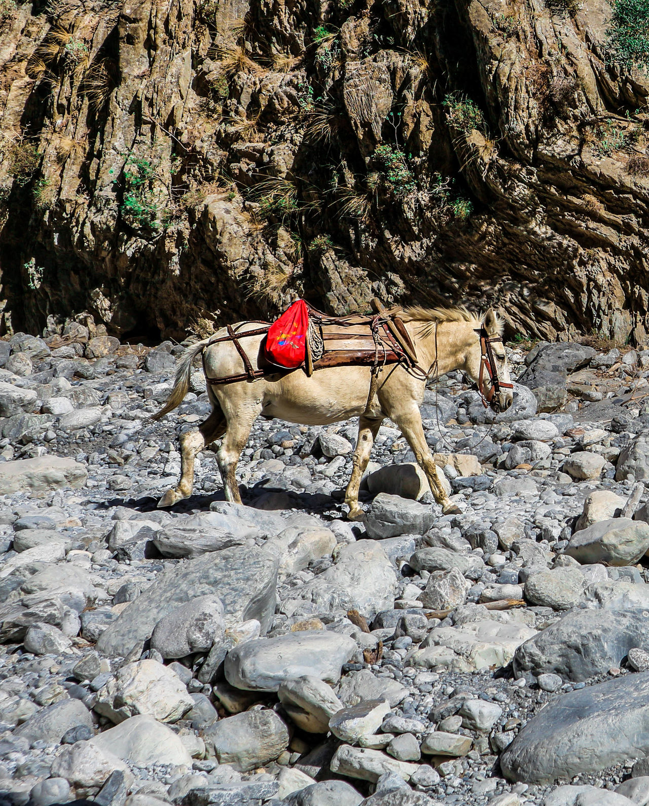 "EyeEm Vision suggests: ""One woman only"" Outdoors Nature Steine Felsenmeer Felswand Rock Formation Canyon Gorge Rocks Samaria Gorge Crete Greece Beauty In Nature Animal Animal Photography Animal Wildlife Animal Themes One Animal Horse Horse Life"