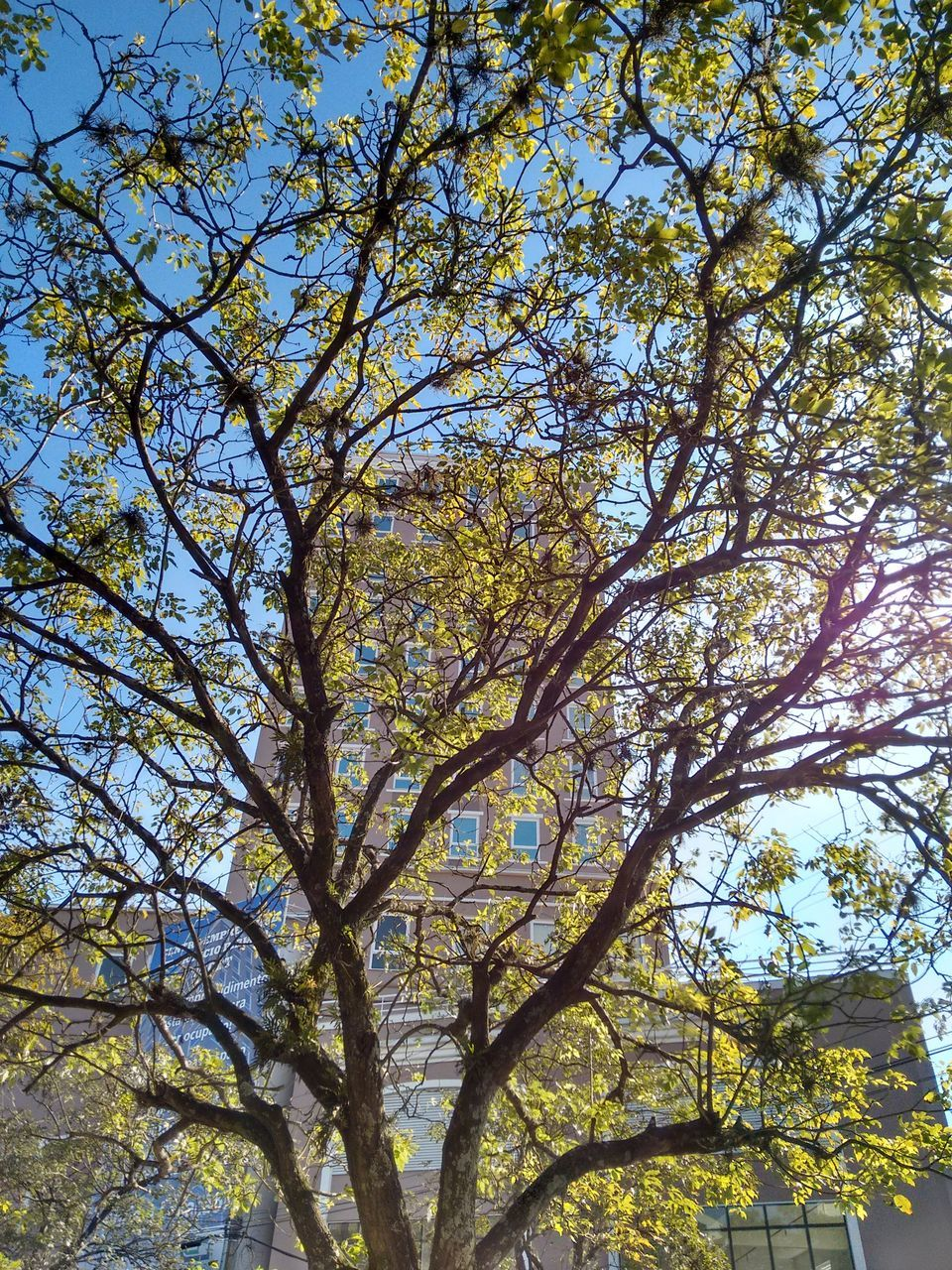 tree, low angle view, branch, nature, day, growth, beauty in nature, no people, outdoors, forest, clear sky, sky