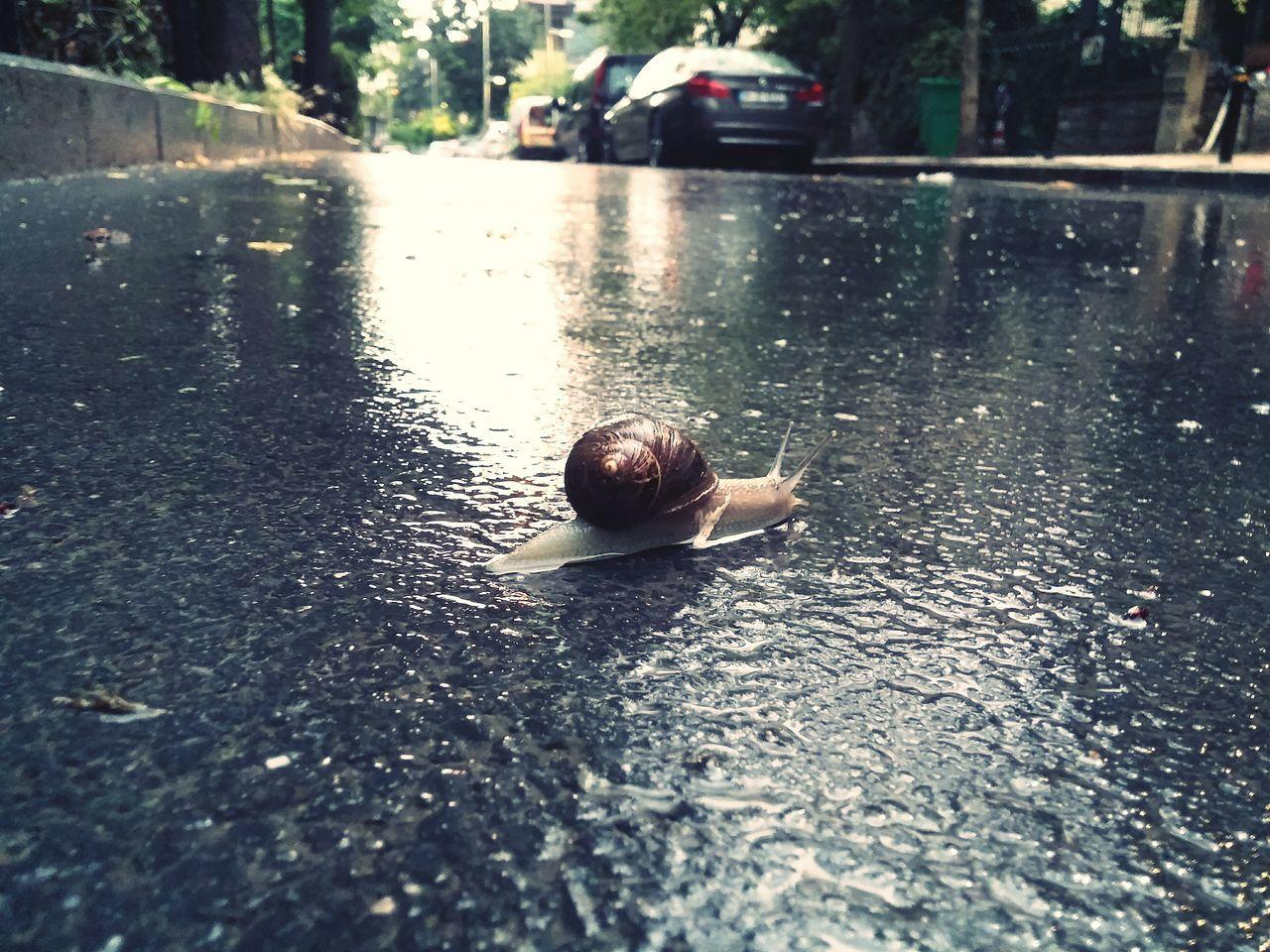 Wet Taking Photos Afterrain Rainy Day Enjoying Life Naturephotography Micro Nature Snail Istanbul City Nature_perfection