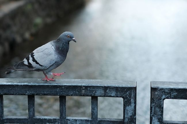 『14:16:55』 2016-10-14 Bird Animal Themes Animals In The Wild One Animal Focus On Foreground Wildlife No People Color Image Day Outdoors Road Creativity City City Life Streetphotography City Street Street Lifestyles Street Art/Graffiti Street Style From Around The World Street Photo Stree Photography Hello Word Hellohello