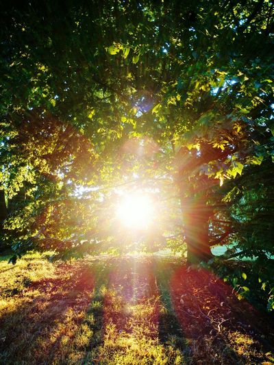 Dramatic Angles Sunlight Tree Sun Sunbeam Tranquility Tranquil Scene Scenics Nature Day Angel Angels Erscheinungen Seraphim Seeing The Sights See A Seraphim Real Photo Godlike Godscreation Signs Signs_collection GodBless Angels & Demons Angels In My Life Luckshot Luckyme Unbelievable Views