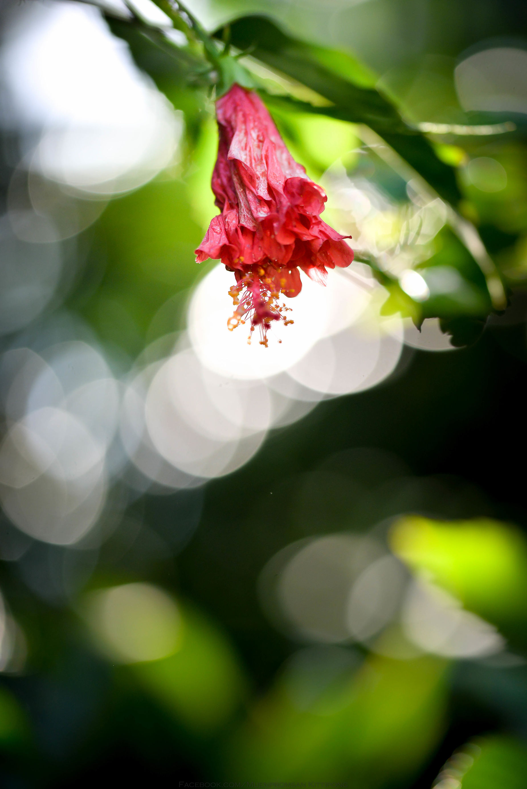 Flower in light Animal Themes Beauty In Nature Blossom Bogeh Close-up Day Flower Flower Head Fragility Freshness Growth Nature No People Outdoors Petal Pistil Plant
