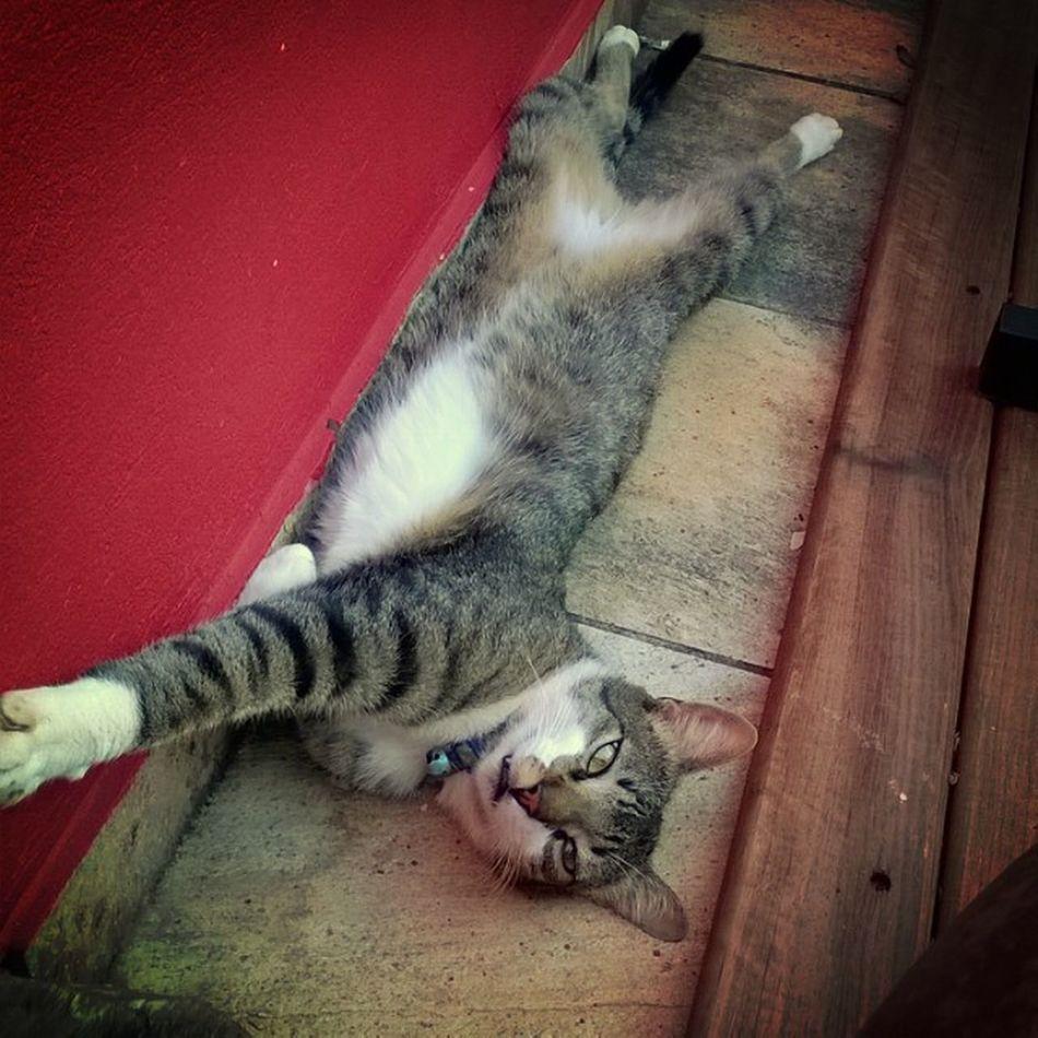 Não mexa no meu silêncio, de não saberá tratar com o meu barulho ! Disse o gato !! Cats Gatosonolento Gatovagabundo Amogatos amocats preguiça