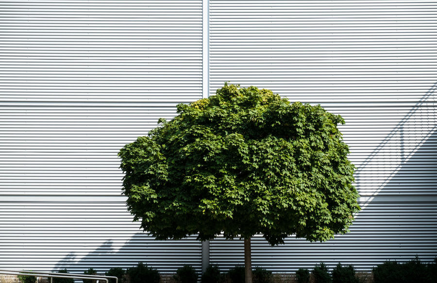 Urbanplantseries Berlin Photography Minimalist Architecture Nature On Your Doorstep Architectural Feature Architecture Architecturelovers Building Exterior Day Fujix_berlin Fujixseries Green Color Growth Minimalism Minimalobsession Nature No People Outdoors Ralfpollack_fotografie Tree Urban Landscape Urban Plant Urbannature Urbanplantseries The Graphic City