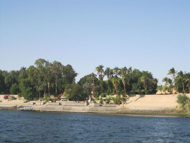#Aswan #Egypt #NoFilter #Plants #river #landscape #photography #nature  Beauty In Nature Nature Tree Water