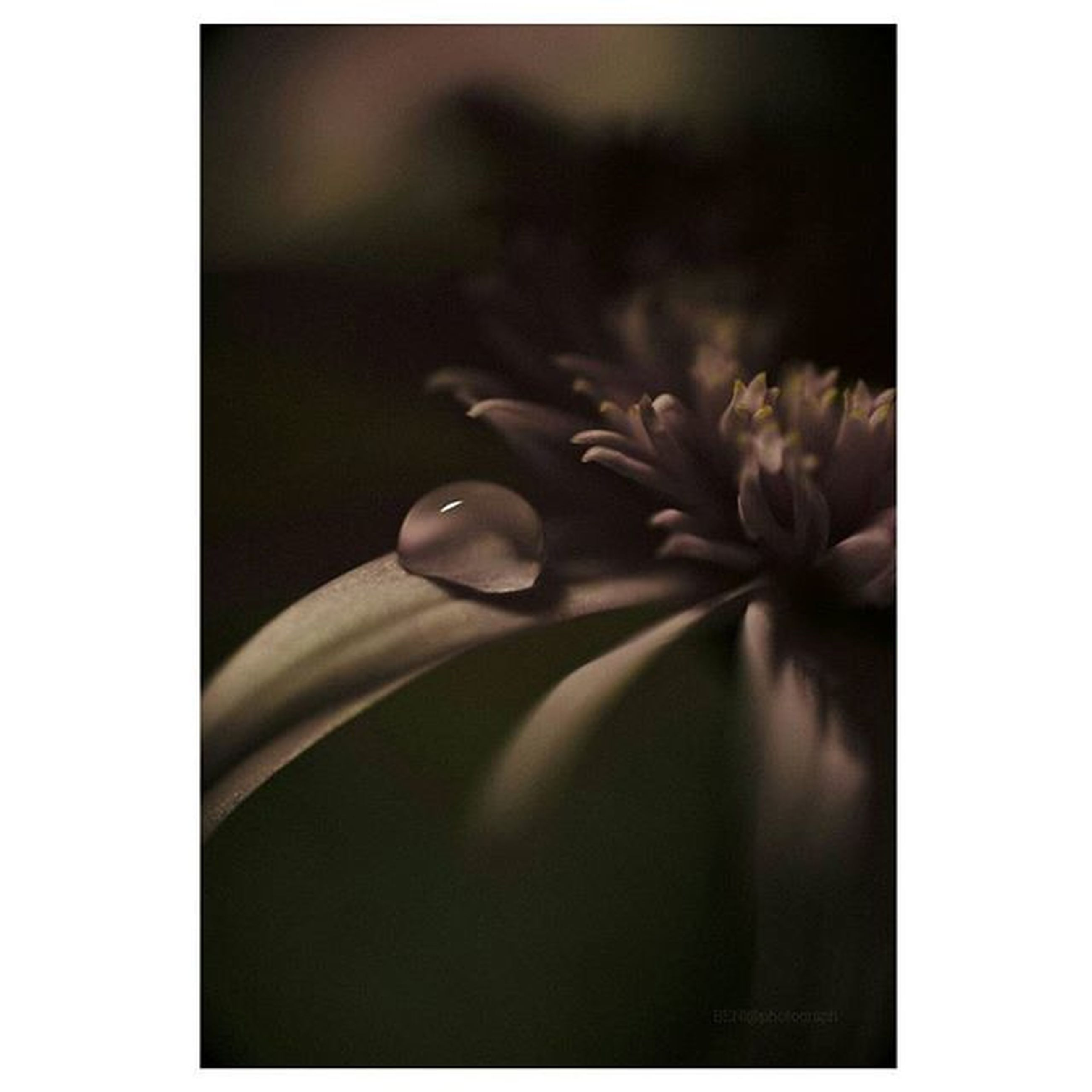 transfer print, auto post production filter, flower, fragility, indoors, close-up, freshness, copy space, flower head, petal, beauty in nature, growth, studio shot, nature, plant, glass - material, no people, selective focus, white color, frame