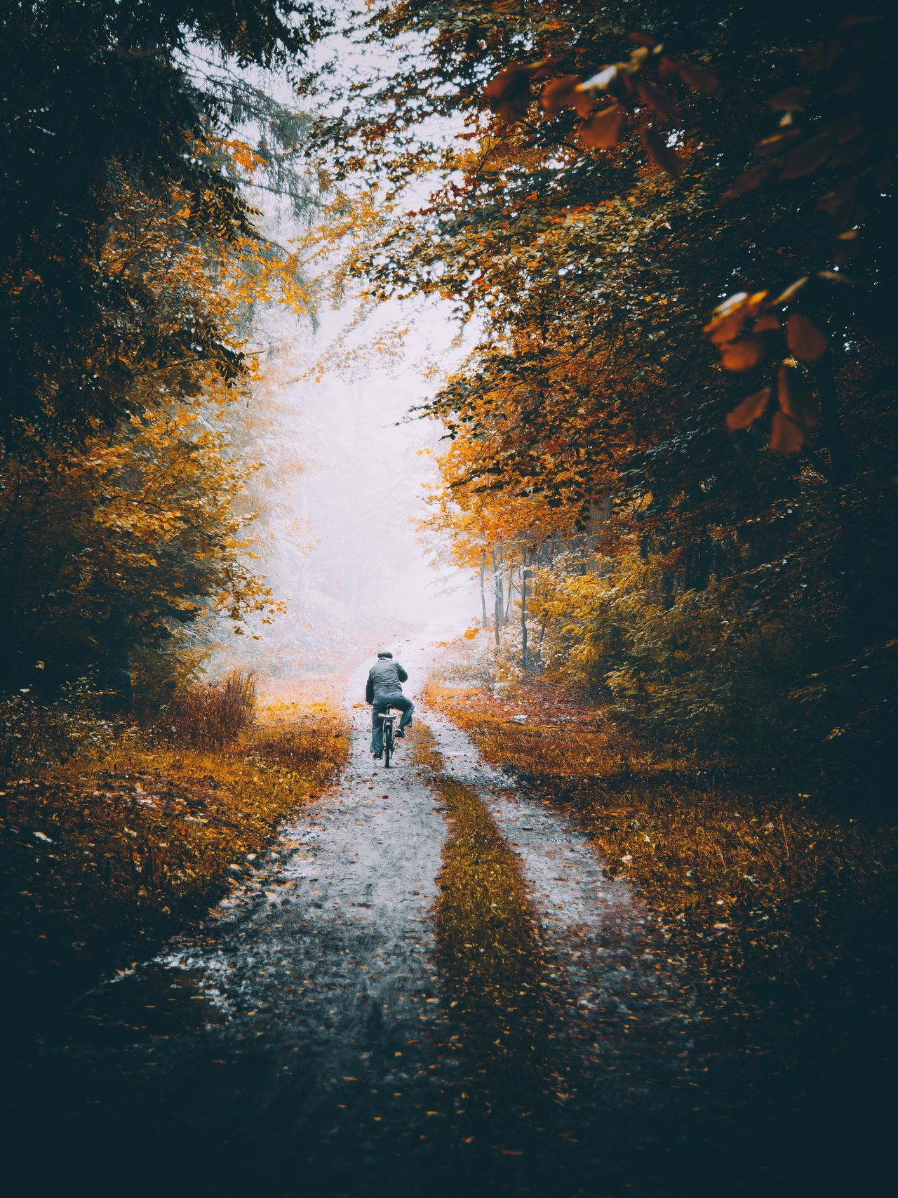 CyclingUnites Water Tree The Way Forward Autumn Full Length Two People Real People Outdoors Nature Rear View Scenics Men Beauty In Nature Pets Day Vertical People Adult The Week On EyeEm