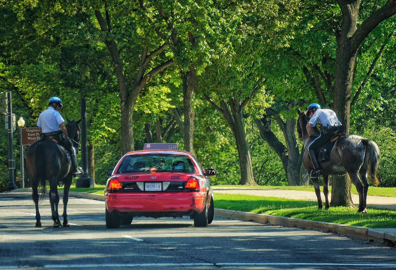 Police question typical DC cab driver, parking himself at an odd angle in the middle of the road at rush hour. They cleared him away before the light changed. Rules Of The Road Cab Taxi Taxis Lackadaisical Taxi Taxis Don't Care, No Way, No How Urban Lifestyle Horses Police Horses Washington DC