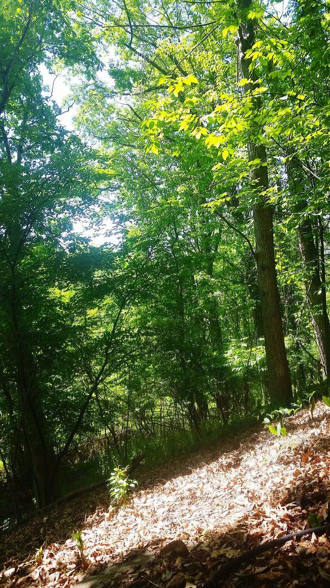 Sunny Forest Explore Upstateny Tree Trees Exploring Summer Summertime Nature Hike Hiking