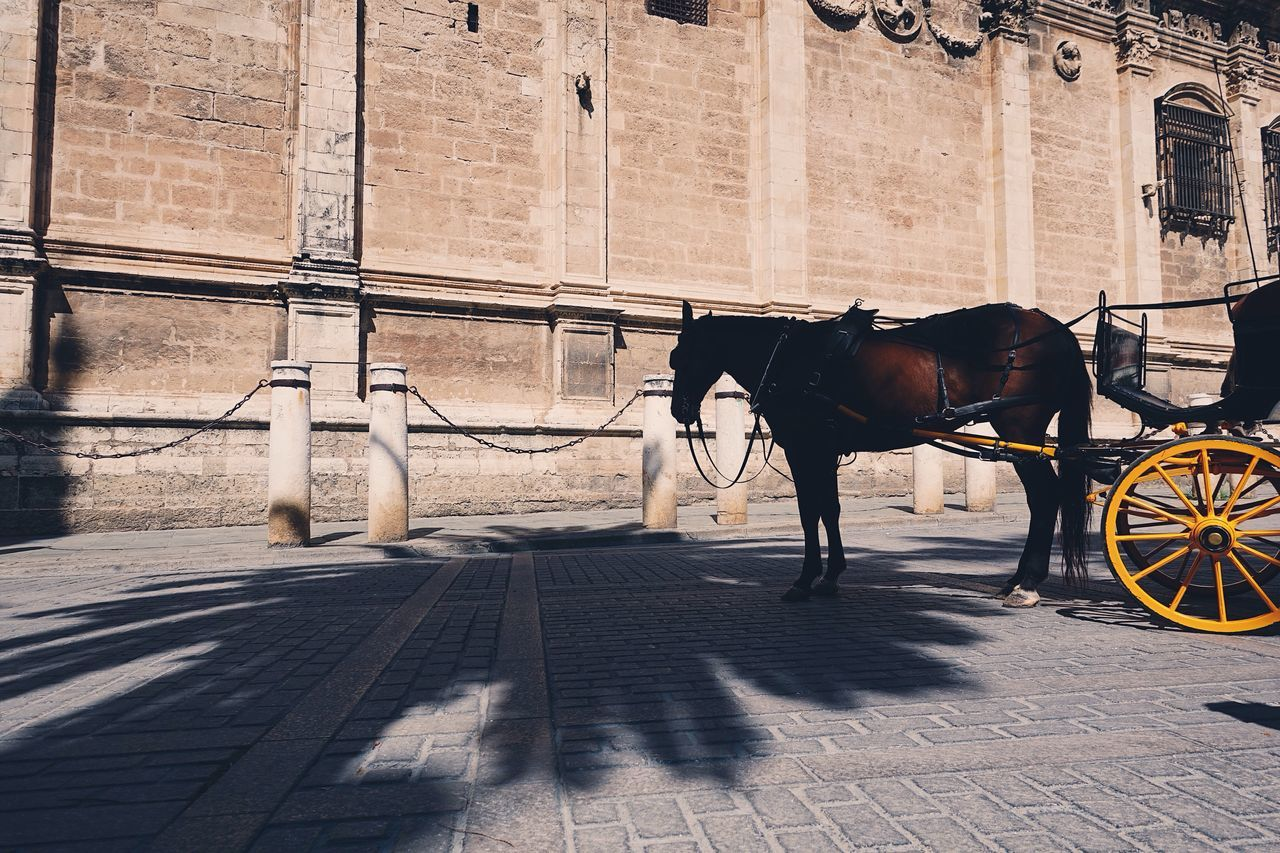 Horse Animal Themes Animals City City Life Shadow Light And Shadow Sunlight Horse Cart Outdoors Working Animal Architecture Travel Nature Tree Scenics SPAIN Adapted To The City