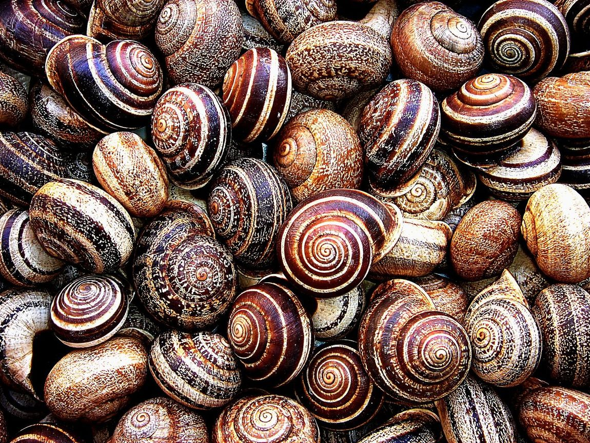 Backgrounds Beige Clam Close-up Coquillage Coquille Escargot Full Frame Indoors  Large Group Of Objects Maron Nature No People Sea Life