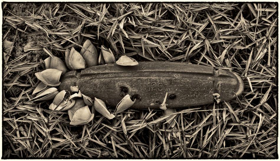 Barnacles Black And White Collection  Blackandwhite Photography Close-up Fish Hooks Grass Islandlife Vietnam The EyeEm Facebook Cover Challenge Vietnam Street View Vietnam Daily Life