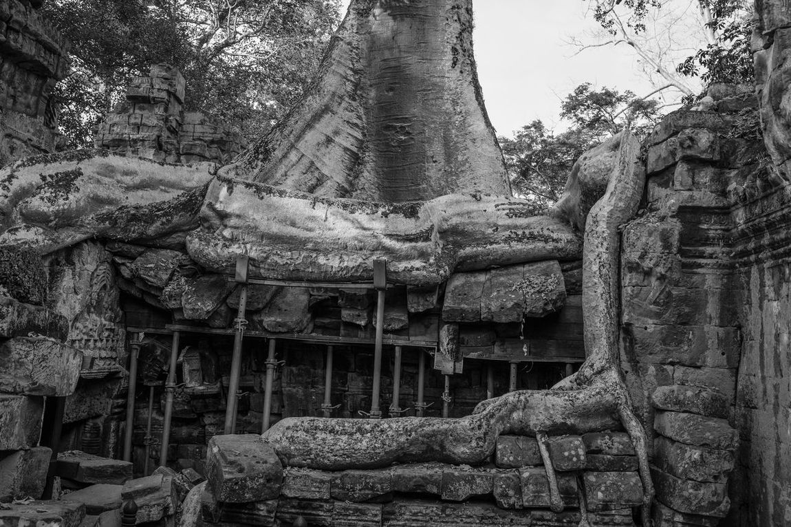 Giant tree in Ta Prohm Temple Ancient Architecture ASIA B&W Collection Building Exterior Built Structure Collapse Day Giant History Low Angle View No People Outdoors Place Of Worship Religion Sculpture Siem Reap, Cambodia Spirituality Statue Ta Prohm Tree Tree_collection  UNESCO World Heritage Site