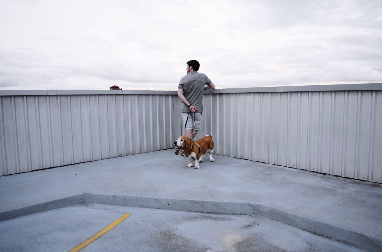 Full Length Rear View Basset Hound Basset Dog Contemplative Hound One Person Sky Grey Soft Rooftop Contemplate Look Search Wonder Consider Considering Think Parking Garage Fence Above Above The City Beyond 2017