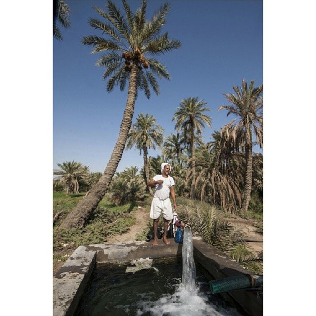 ___ صباح الهدى من ضوء وجهك مسفر ومن نوره ليلُ التهجد مقمرُ  الحلي  البحرين Bahrain Duraz الدراز bh_photographer