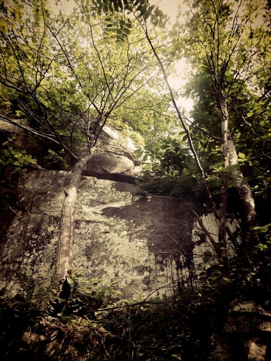 Trees And Sky Trees And Nature Trees And Bushes Trees And Leaves Trees And Branches Trees And Rocks Corbin Kentucky Cumberland Falls Eyeem On Instagram