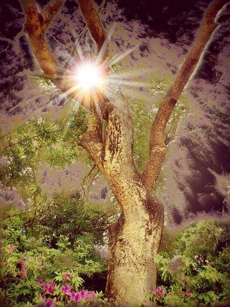 Sun Light Trees