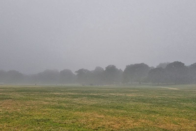 -Fog Rolls In - Prospect Park NYC Photography Fog_collection Fog On The Hills Fog And Trees Forest Medow