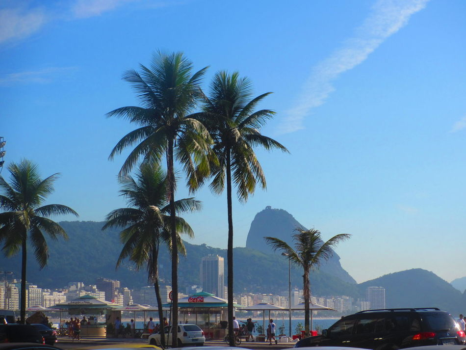 Beautiful stock photos of palm tree, Brazil, Car, City, Day