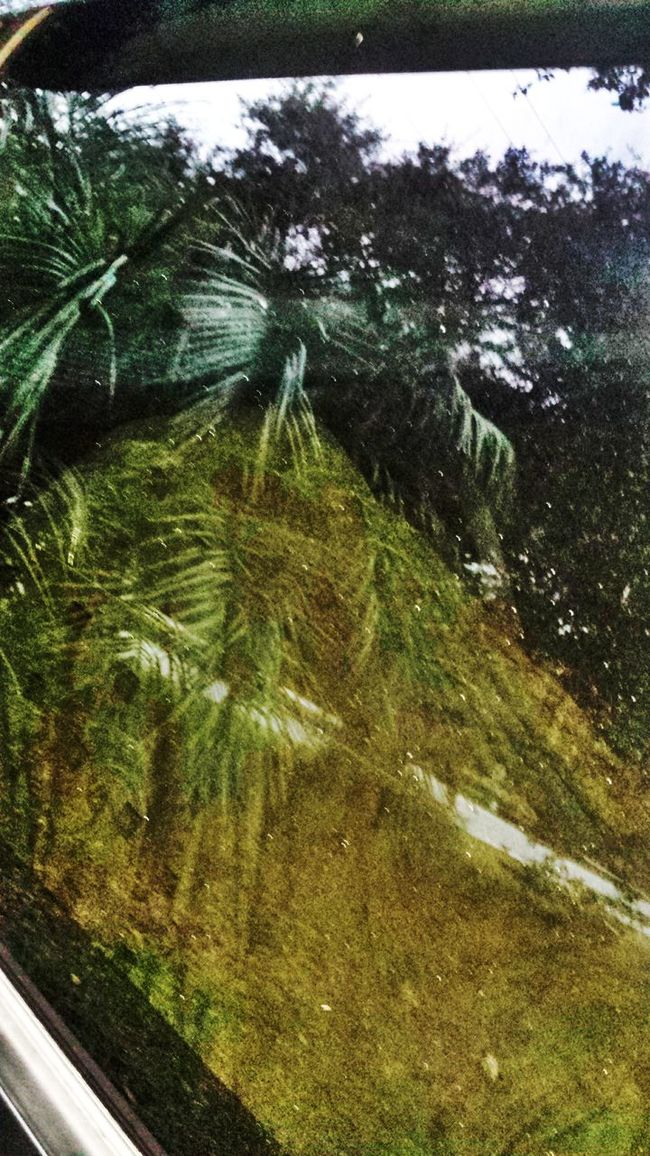 Reflection TreePorn