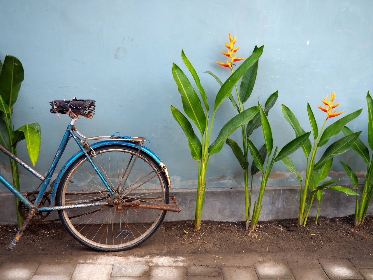 Bicycle Day Green Color Leaf No People Outdoors Parking Plant Potted Plant Stationary Transportation