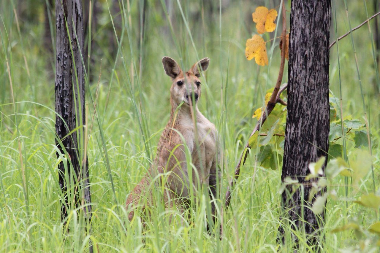 Beautiful stock photos of australia, Animal Head, Animal Themes, Animals In The Wild, Day