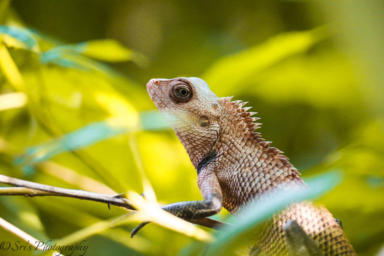 Garden Lizard Reptile Reptiles Reptile World Nature Outdoors EyeEm Nature Lover EyeEm Best Shots First Eyeem Photo Alone Summer Sunlight Canon700D Green Greenery Eyeemphotography Chennai Tamilnadu India